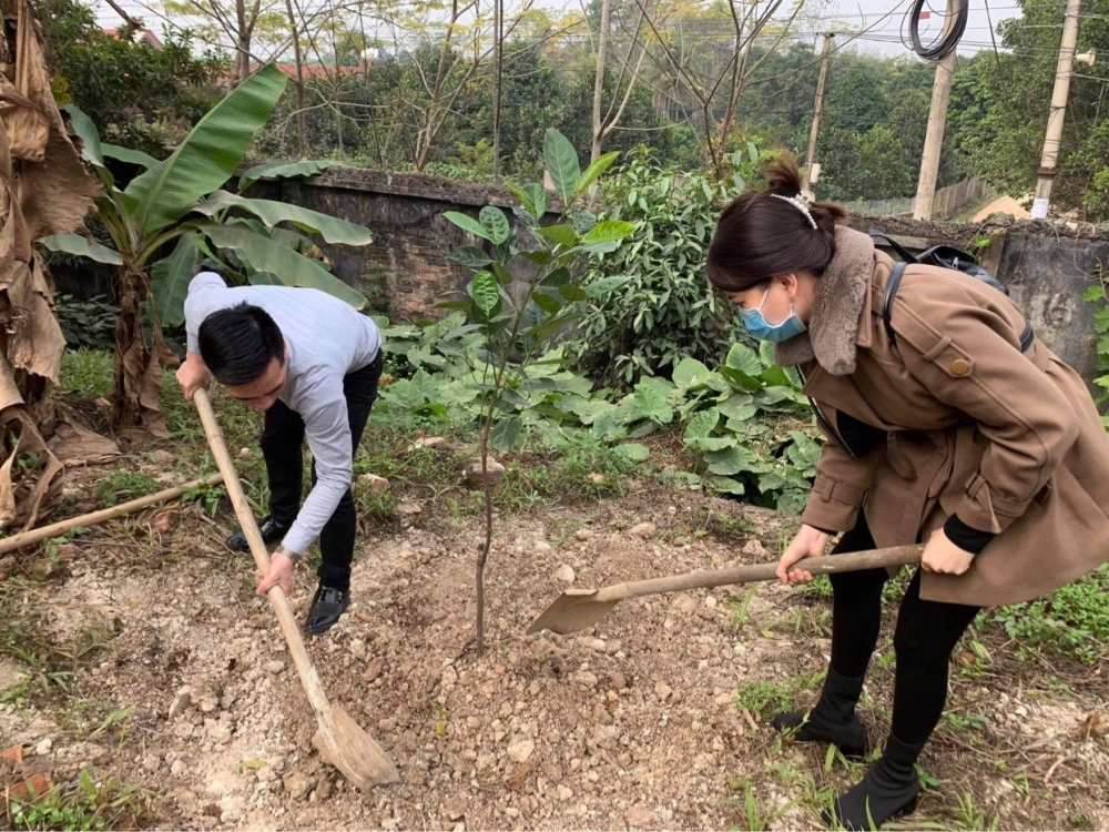 Hà Nội phấn đấu vượt chỉ tiêu những năm trước về trồng mới cây xanh