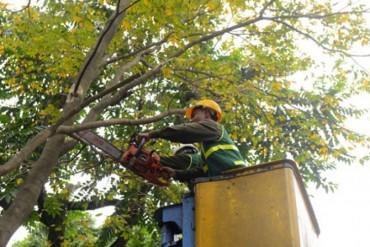 Hà Nội tăng cường kiểm tra, cắt tỉa cây trước mùa mưa bão