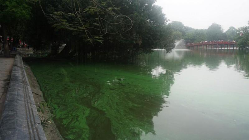 Không có hiện tượng tảo nở hoa, phú dưỡng trên hồ Hoàn Kiếm