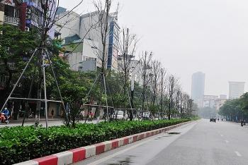 Hà Nội: Trồng mới cây bàng lá nhỏ tại dải phân cách Nguyễn Chí Thanh - Trần Duy Hưng