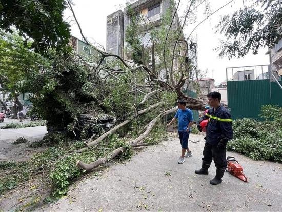 Cây xanh bất ngờ bật gốc, đè trúng ô tô trên phố Lê Quý Đôn