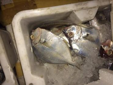 Bắt giữ 4 tấn cá ướp lạnh không rõ nguồn gốc