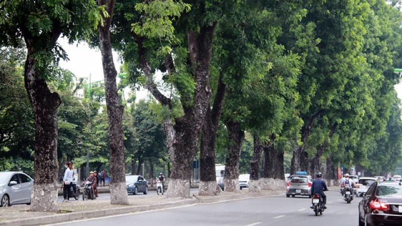 Di chuyển 175 cây xanh phục vụ thi công đường sắt nội đô