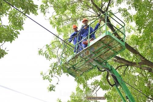 Hà Nội cắt tỉa cây trên 408 tuyến phố trước mùa mưa bão năm 2019