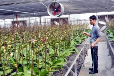 Đan Phượng tiếp tục đề xuất đầu tư 2 dự án nông nghiệp tại vùng thoát lũ