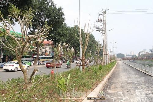 Kiểm tra, rà soát các vị trí trồng cây khi cắt xén hè đường