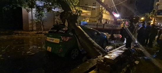 Hà Nội: Cây xanh bật gốc đè bẹp xe taxi trên phố Bùi Bằng Đoàn
