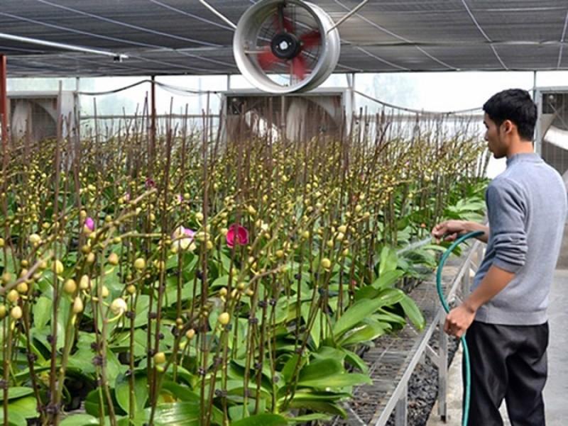Đan Phượng chú trọng chuyển đổi cơ cấu cây trồng, vật nuôi