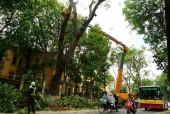 Lập tổ cơ động xử lý sự cố cây xanh trong cơn bão số 4