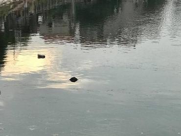 Phát hiện thi thể một người đàn ông trong hồ Hạ Đình