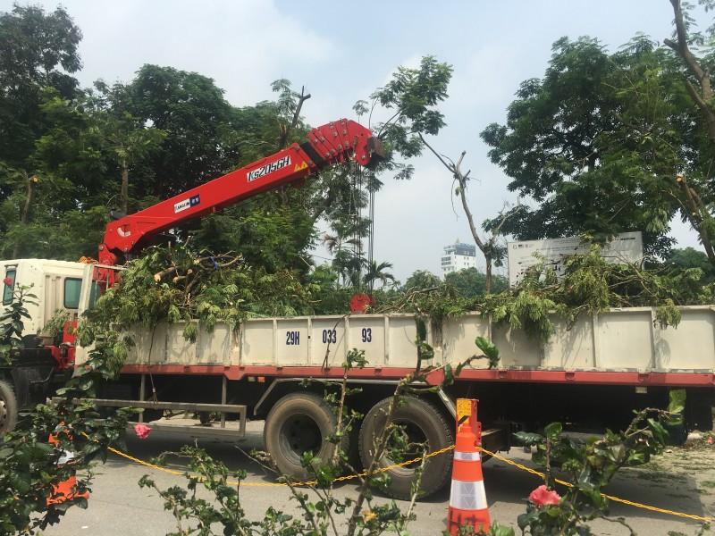 Hà Nội: Triển khai cắt tỉa cây xanh trên phố Kim Mã