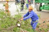 Cắt tỉa, đánh chuyển cây xanh trên đường Phạm Văn Đồng