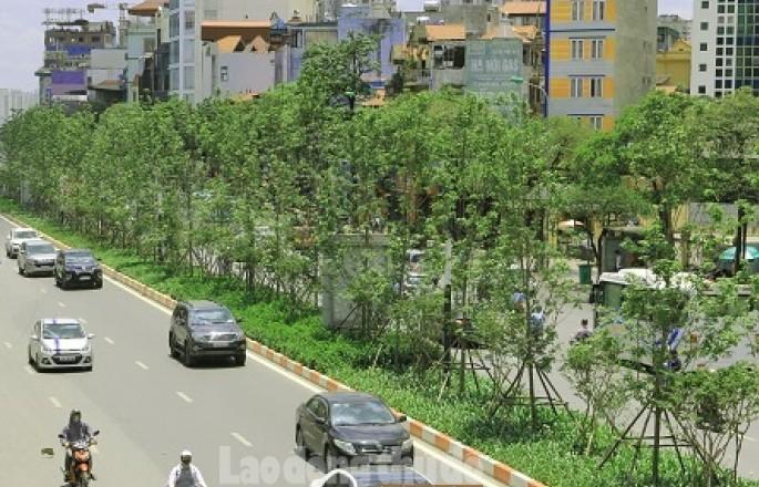 Hà Nội: Tiếp tục mở rộng diện tích cây xanh