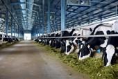 Vinamilk đưa vào hoạt động trang trại bò sữa đạt chuẩn quốc tế