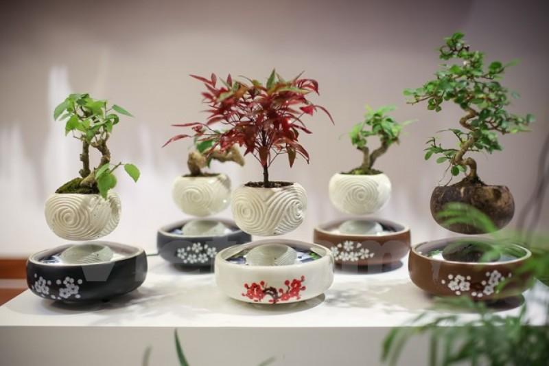 Tết Đinh Dậu 2017: Cây bonsai bay lơ lửng 'độc,' lạ hút khách Thủ đô