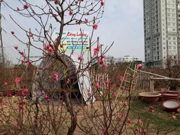 Đi đâu tuần giáp Tết Đinh Dậu 2017?