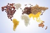 Giá lương thực thế giới tiếp tục tăng trong năm 2018