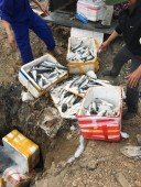 Quảng Ninh: Ngăn chặn xe tải chở 1,5 tấn cá Trung Quốc nhập lậu