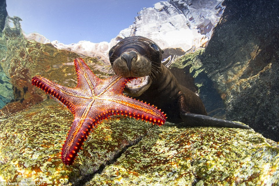 Chiêm ngưỡng khung cảnh ngoạn mục dưới đáy đại dương