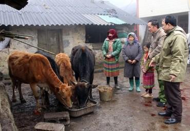 Cấp gạo hỗ trợ nhân dân năm địa phương trong dịp Tết Nguyên đán