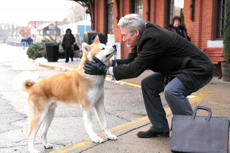 Chuyện cảm động về 5 chú chó trung thành