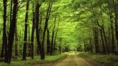 Nam Cát Tiên - Khu rừng cổ tích