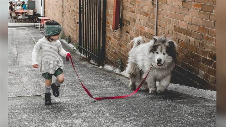 9 bài học cuộc sống thú vị từ những chú chó