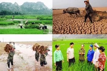 Hỗ trợ phí bảo hiểm nông nghiệp đối với hộ nông dân nghèo