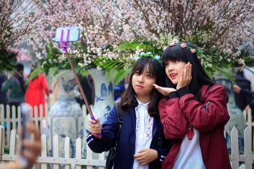 Lễ hội hoa anh đào Hà Nội kéo dài thêm một ngày