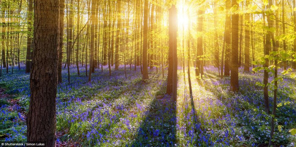 Những khu rừng đẹp ngoài sức tưởng tượng