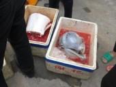 Ba người đàn ông bị truy tố vì xẻ thịt cá heo bán ngay lề đường