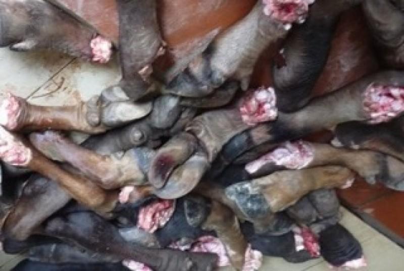Hà Nội: Phát hiện hơn 1 tấn chân trâu, bò bốc mùi hôi thối