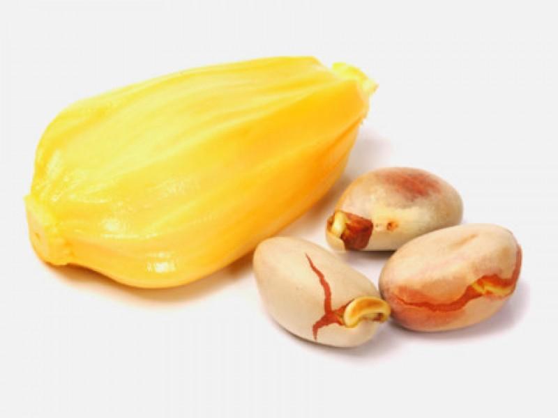 Công dụng chữa bệnh không thể bỏ qua của hạt mít