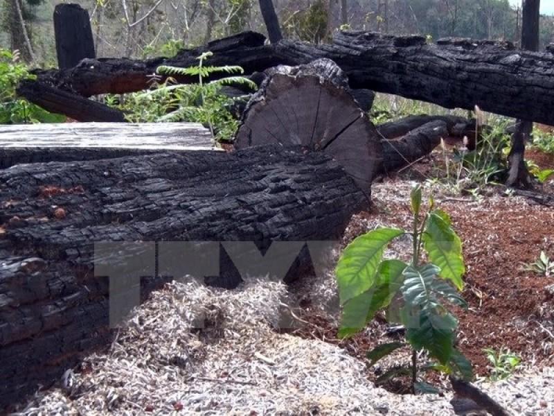 """Đắk Nông: Bắt khẩn cấp đối tượng chuyên """"bảo kê"""" phá rừng"""