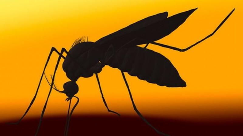 Xuất hiện trường hợp nhiễm Zika bất thường tại Mỹ