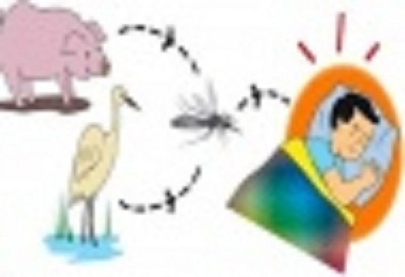 6 biện pháp phòng chống bệnh viêm não Nhật Bản