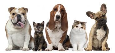 7 bệnh bạn có thể bị lây từ thú cưng