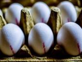 Châu Âu thu hồi hàng triệu quả trứng có thuốc trừ sâu