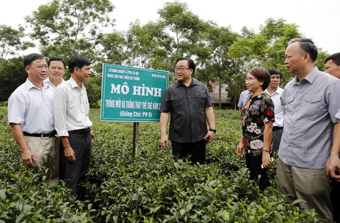 Bí thư Hoàng Trung Hải: Hỗ trợ nông dân phát triển sản xuất, nâng cao đời sống