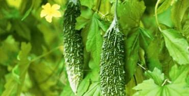 7 loại cây phổ biến vừa ăn vừa có tác dụng chữa bệnh