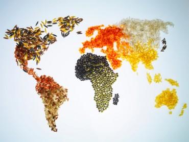 APEC 2017: 'Nóng' chuyện an ninh lương thực