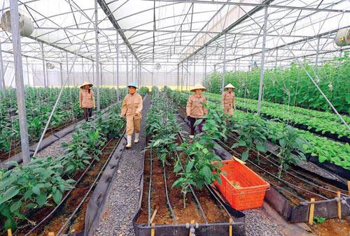 Đề xuất nhiều ưu đãi với doanh nghiệp đầu tư nông nghiệp
