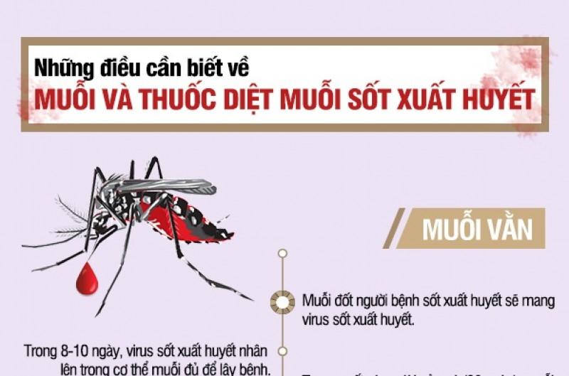 Sốt xuất huyết: Những điều cần biết về muỗi và thuốc diệt muỗi
