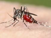 Cảnh báo sốt rét kháng thuốc
