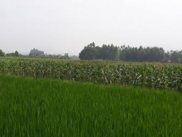 Dự thảo mới về Nghị định đầu tư vào nông nghiệp: Gỡ nút thắt tích tụ đất đai