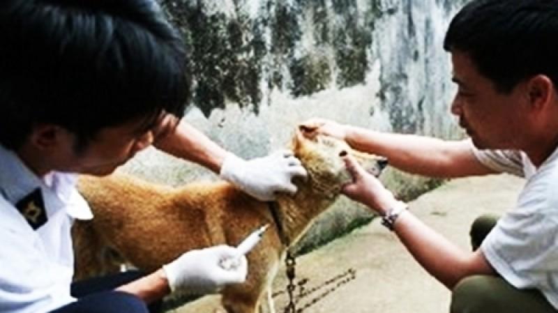 Bệnh dại ở Việt Nam có chiều hướng tăng cao trở lại
