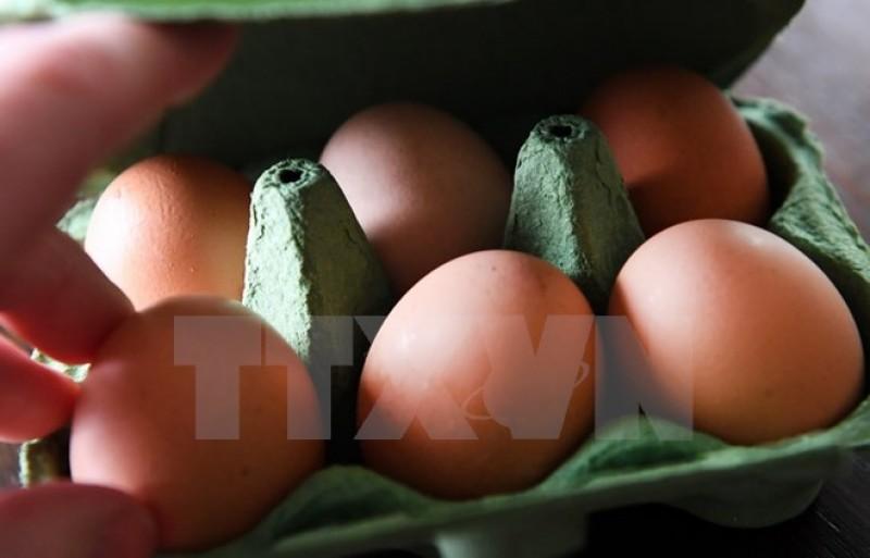 Nhật Bản lai tạo thành công gà đẻ trứng chữa bệnh với chi phí thấp