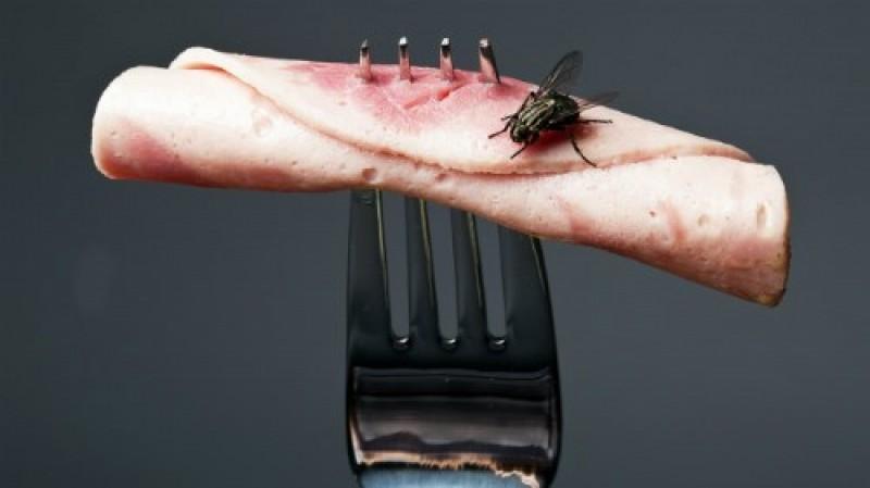 Điều gì xảy ra khi ruồi đậu vào thức ăn?