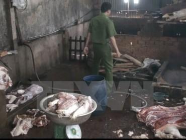 Bắt quả tang một cơ sở giết mổ lợn bị bệnh bán ra thị trường