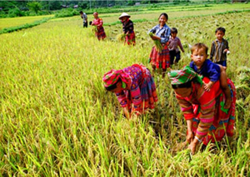 Phân bổ vốn Chương trình mục tiêu quốc gia giảm nghèo